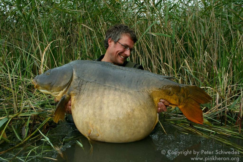 Carpe record top 20 des plus grosses carpes de france for Acheter carpe pour etang