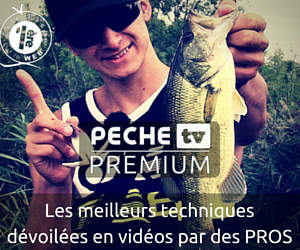 Video Peche Internet